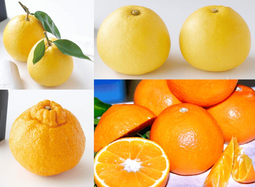 宇土天草半島 4種の柑橘
